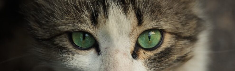 Part 2: It's Reigning Cats and Dogs: The Psychic Lives of Our Pets